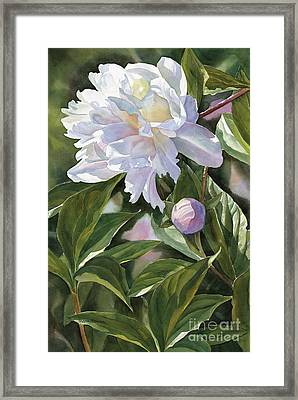 White Peony With Bud Framed Print by Sharon Freeman