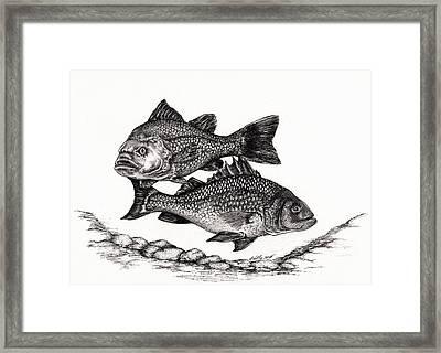 White Perch Framed Print