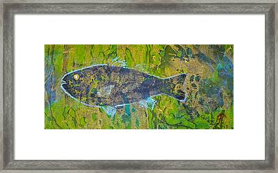 White Perch - Morone Americana Framed Print