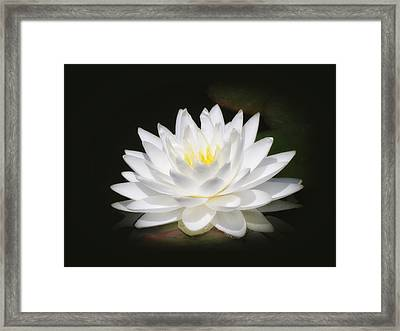 White Petals Glow - Water Lily Framed Print by MTBobbins Photography