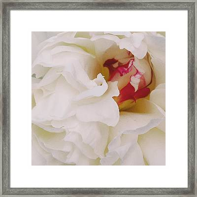 White Petals Framed Print by Michael Peychich