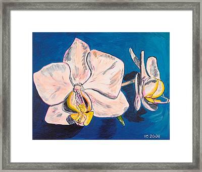 White Phalaenopsis Orchids Framed Print