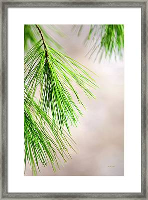 Framed Print featuring the photograph White Pine Branch by Christina Rollo