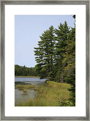 White Pines Framed Print by Alan Rutherford
