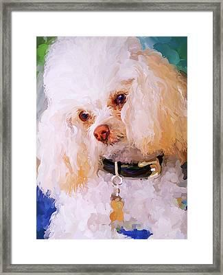 White Poodle Framed Print by Jai Johnson