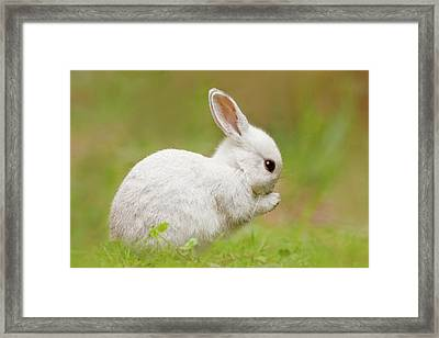 White Rabbit - Cute Overload Framed Print by Roeselien Raimond