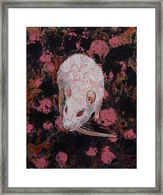 White Rat Framed Print