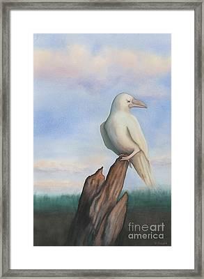 White Raven Framed Print by Anne Havard