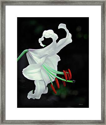 White, Red And Green Lily Framed Print