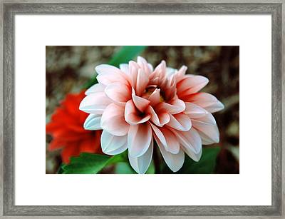 White Red Flower Framed Print