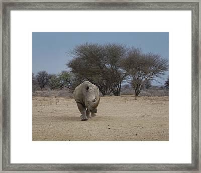 White Rhino 1 Framed Print by Ernie Echols