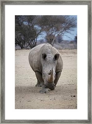White Rhino 2 Framed Print by Ernie Echols
