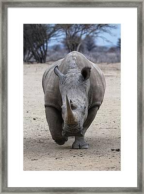 White Rhino 3 Framed Print by Ernie Echols