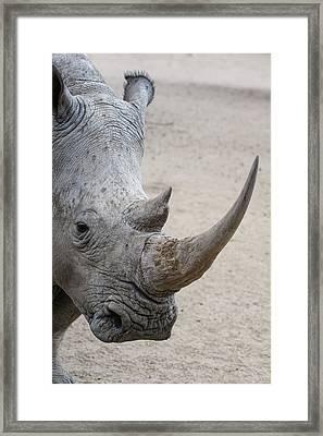 White Rhino 5 Framed Print by Ernie Echols