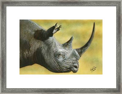 White Rhino Framed Print