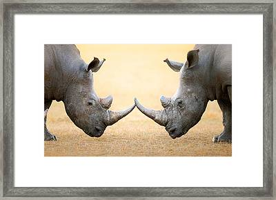 White Rhinoceros  Head To Head Framed Print