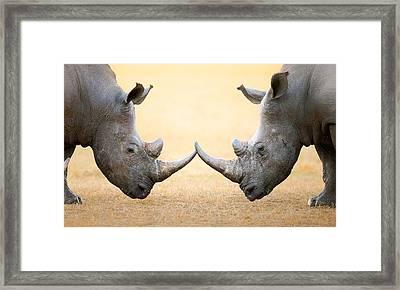 White Rhinoceros  Head To Head Framed Print by Johan Swanepoel