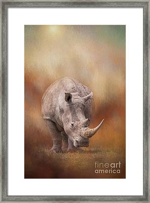 White Rhinoceros In Summer Sun Framed Print