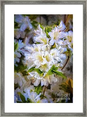 White Rhododendron Framed Print