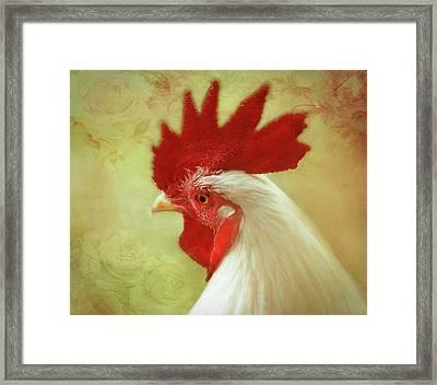 White Rooster Framed Print