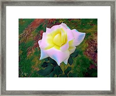 White Rose 02 ...22.54 Photograph Picture Framed Print