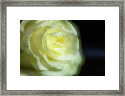 White Rose 4 Soft Framed Print