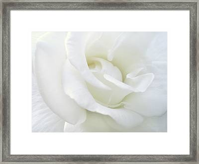White Rose Angel Wings Framed Print by Jennie Marie Schell