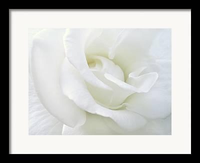 Ivory Flower Framed Prints
