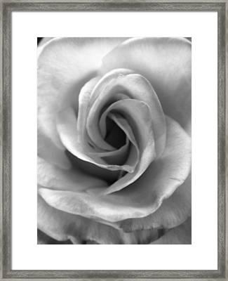 White Rose Framed Print by Beverly Johnson