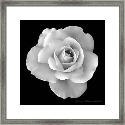 White Rose Flower In Black And White Framed Print
