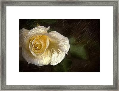 White Rose Framed Print by Graham Hughes