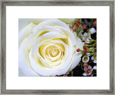 White Rose Framed Print by Graham Taylor