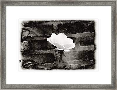 White Rose In Black And White Framed Print by Bill Cannon