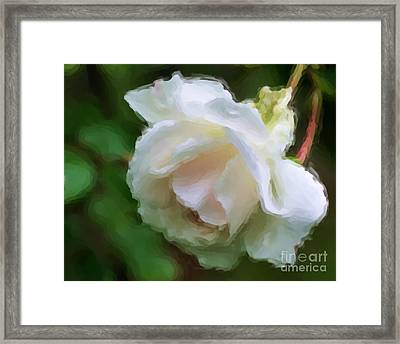Framed Print featuring the painting White Rose In Paint by Smilin Eyes  Treasures