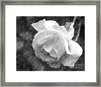 Framed Print featuring the drawing White Rose In Pencil by Smilin Eyes  Treasures
