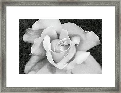 Framed Print featuring the photograph White Rose Macro Black And White by Jennie Marie Schell