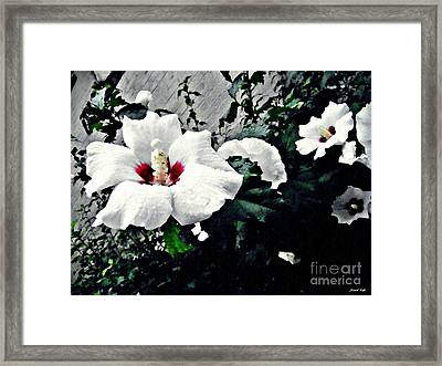 White Rose Mallows 2 Framed Print