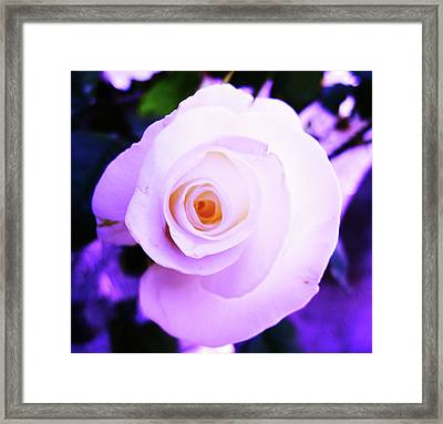 Framed Print featuring the photograph White Rose by Mary Ellen Frazee