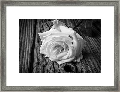 White Rose On Wood Framed Print