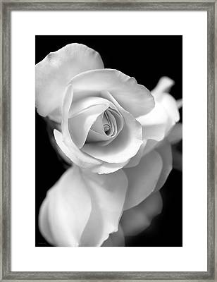 White Rose Petals Black And White Framed Print