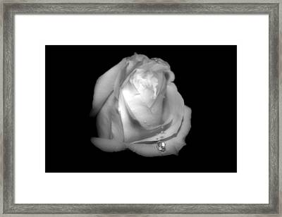 White Rose  Framed Print by Gulf Island Photography and Images