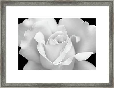 Framed Print featuring the photograph White Rose Purity by Jennie Marie Schell
