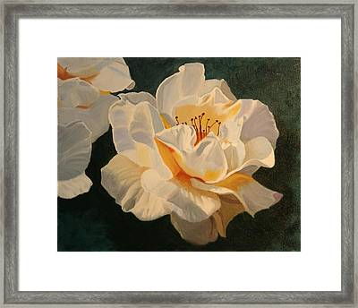 White Rose Framed Print by Robert Tower