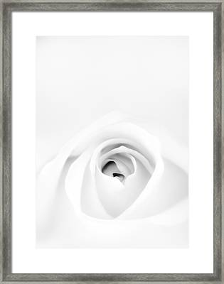 White Rose Framed Print by Scott Norris