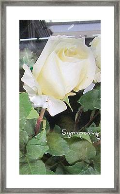 White Rose - Sympathy Card Framed Print