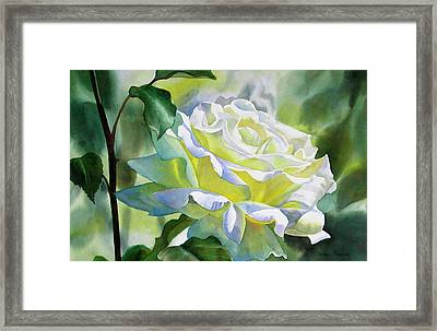 White Rose With Yellow Glow Framed Print by Sharon Freeman