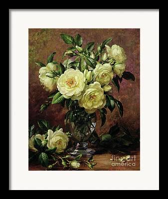 White Rose Framed Prints