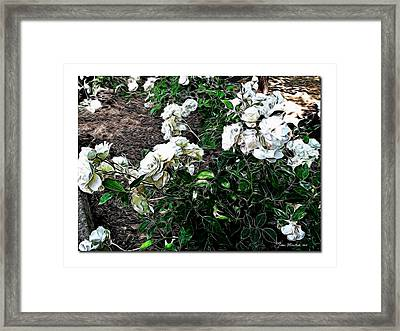 Framed Print featuring the photograph White Roses by Joan  Minchak