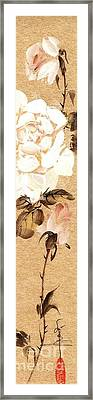 White Roses Framed Print by Linda Smith