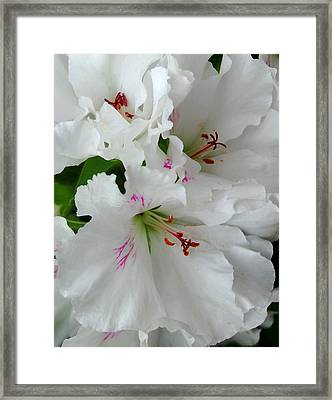 Framed Print featuring the photograph White Ruffles by Marilynne Bull